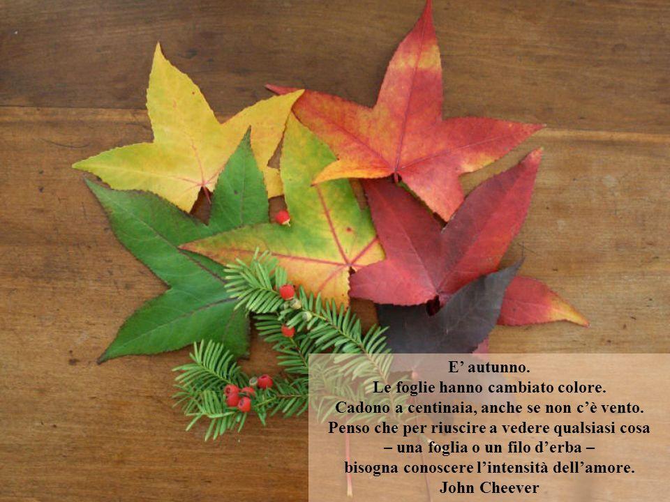 E autunno.Le foglie hanno cambiato colore. Cadono a centinaia, anche se non cè vento.