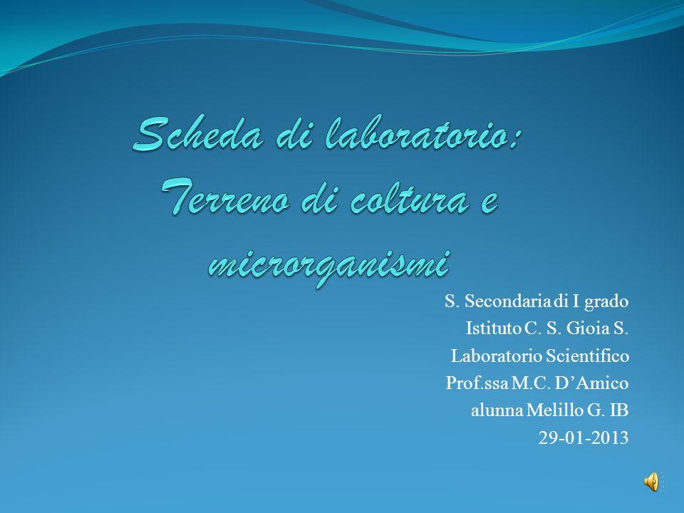 S. Secondaria di I grado Istituto C. S. Gioia S. Laboratorio Scientifico Prof.ssa M.C. DAmico alunna Melillo G. IB 29-01-2013