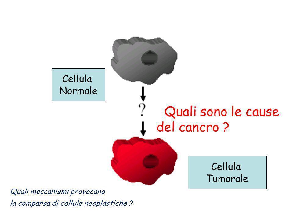 Cellula Tumorale Cellula Normale Quali sono le cause del cancro ? Quali meccanismi provocano la comparsa di cellule neoplastiche ?