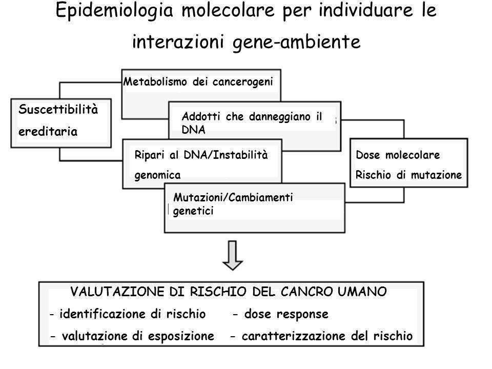 Epidemiologia molecolare per individuare le interazioni gene-ambiente Metabolismo dei cancerogeni Suscettibilità ereditaria Addotti che danneggiano il