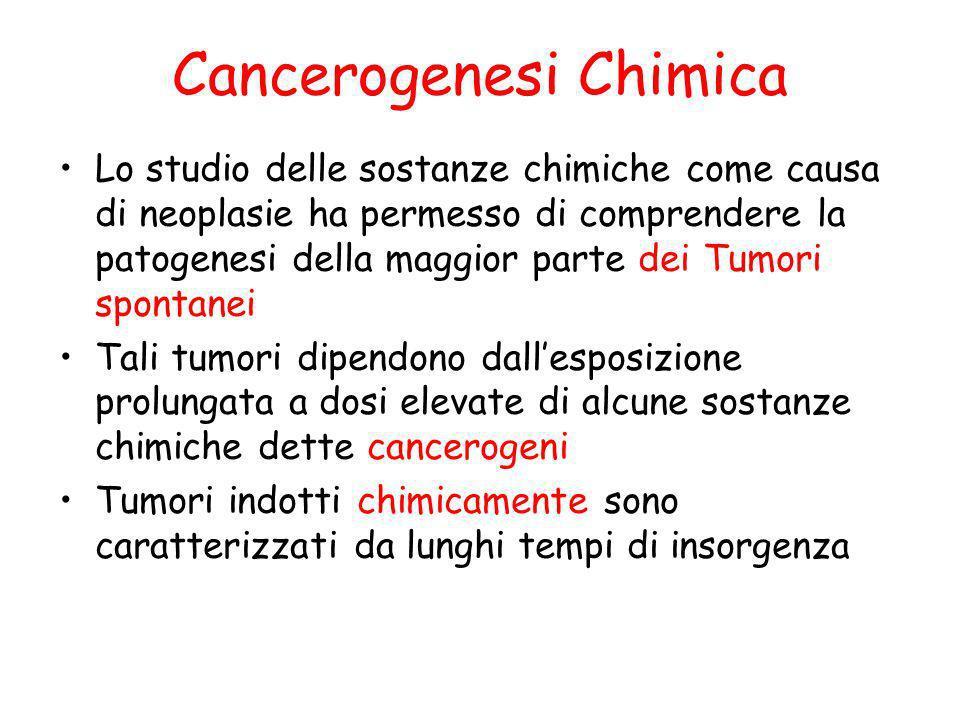 Cancerogenesi Chimica Lo studio delle sostanze chimiche come causa di neoplasie ha permesso di comprendere la patogenesi della maggior parte dei Tumor