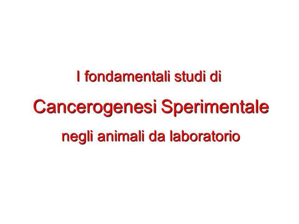 I fondamentali studi di Cancerogenesi Sperimentale negli animali da laboratorio