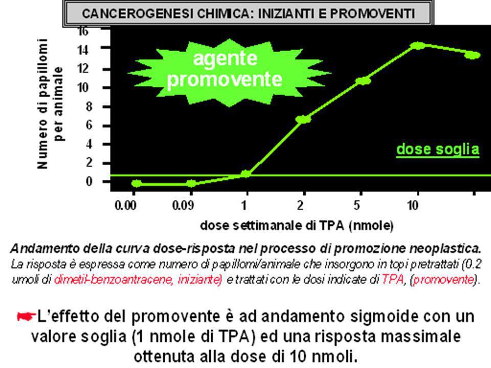 Diapositiva 17 di 17