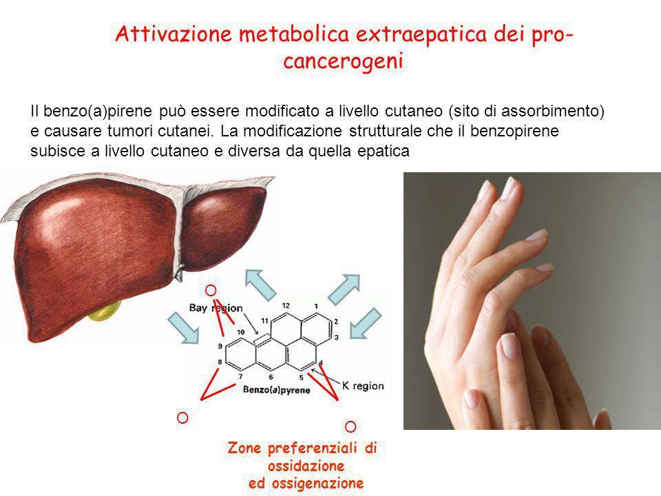 Attivazione metabolica extraepatica dei pro- cancerogeni Il benzo(a)pirene può essere modificato a livello cutaneo (sito di assorbimento) e causare tu