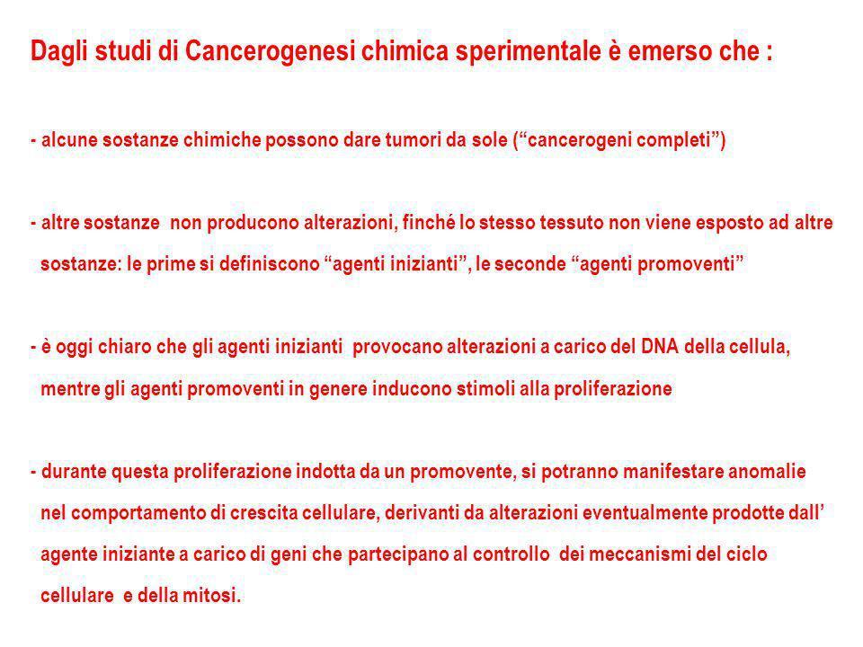 Dagli studi di Cancerogenesi chimica sperimentale è emerso che : - alcune sostanze chimiche possono dare tumori da sole (cancerogeni completi) - altre