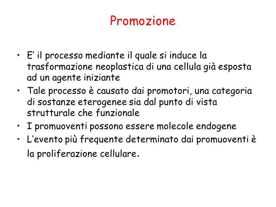 Promozione E il processo mediante il quale si induce la trasformazione neoplastica di una cellula già esposta ad un agente iniziante Tale processo è c