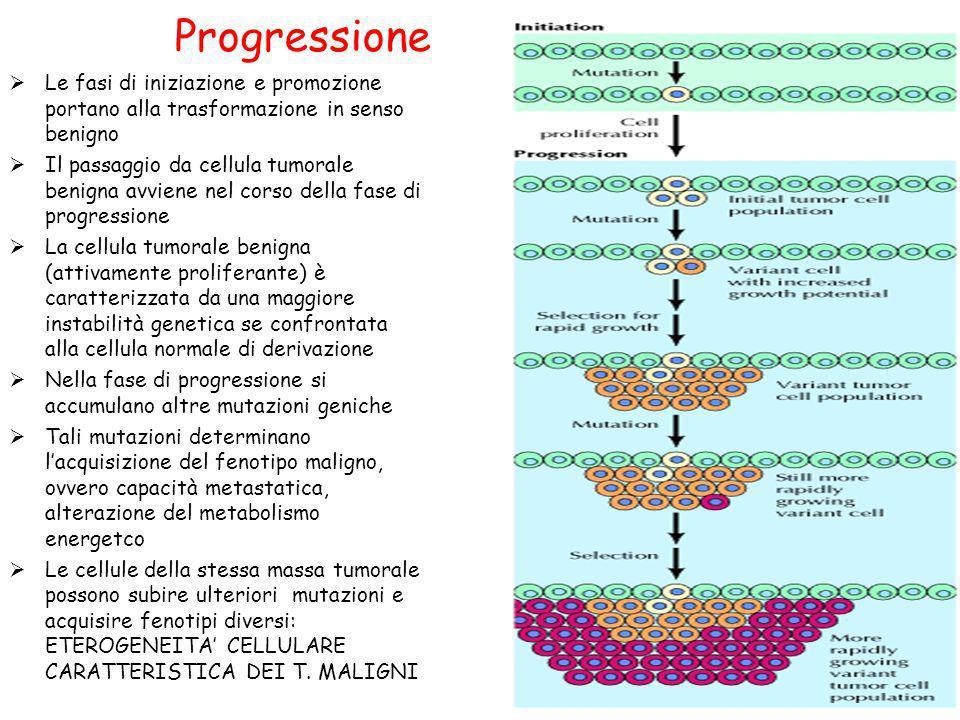Progressione Le fasi di iniziazione e promozione portano alla trasformazione in senso benigno Il passaggio da cellula tumorale benigna avviene nel cor