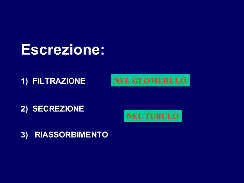 Escrezione: 1) FILTRAZIONE 2) SECREZIONE 3) RIASSORBIMENTO NEL GLOMERULO NEL TUBULO