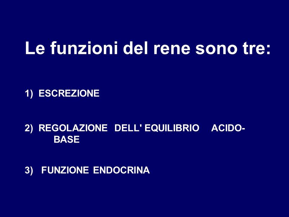 Le funzioni del rene sono tre: 1) ESCREZIONE 2) REGOLAZIONE DELL' EQUILIBRIO ACIDO- BASE 3) FUNZIONE ENDOCRINA