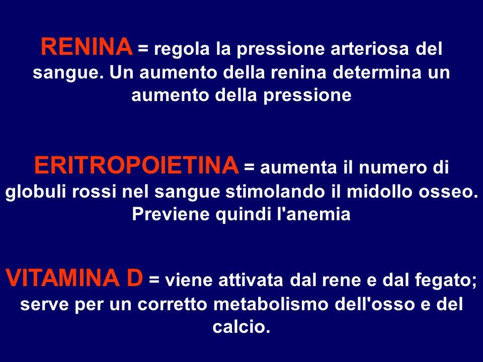 RENINA = regola la pressione arteriosa del sangue. Un aumento della renina determina un aumento della pressione ERITROPOIETINA = aumenta il numero di