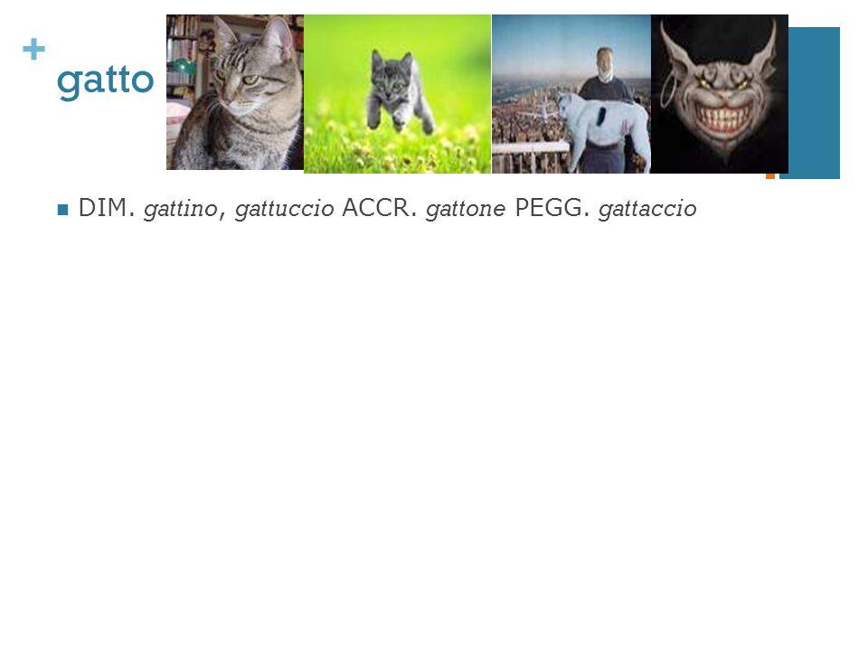 + gatto DIM. gattino, gattuccio ACCR. gattone PEGG. gattaccio