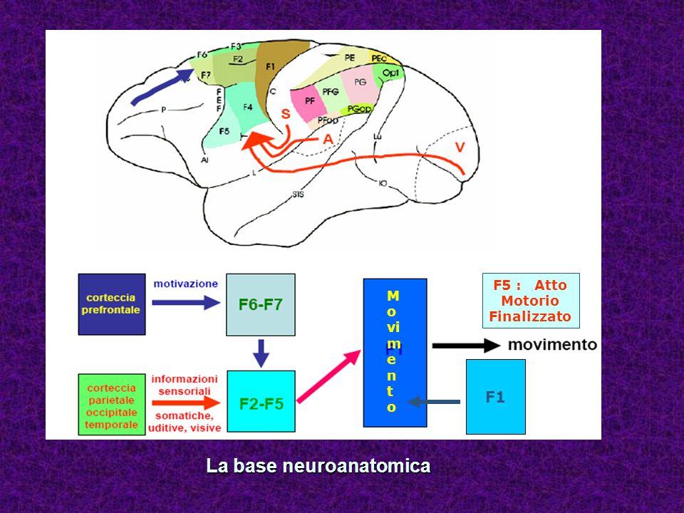La base neuroanatomica F1 M o vi m e n t o F5 : Atto Motorio Finalizzato