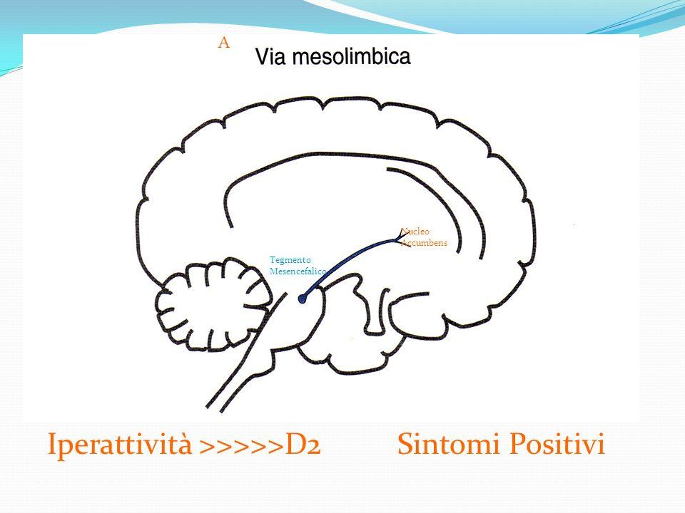 A Nucleo Accumbens Tegmento Mesencefalico Iperattività >>>>>D2 Sintomi Positivi