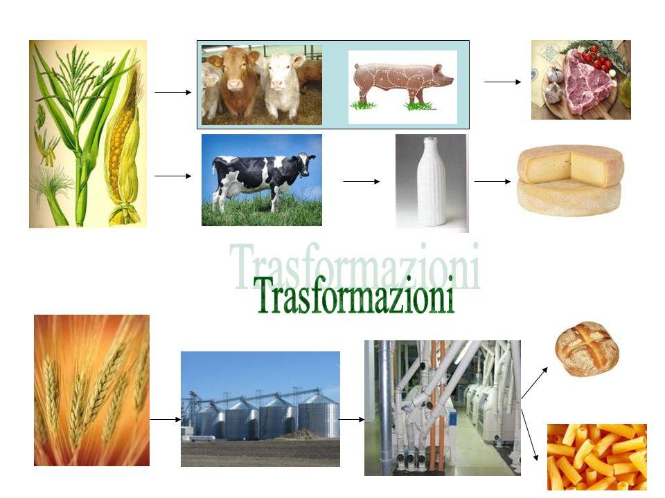 Articolazione Viticoltura ed Enologia viticoltura