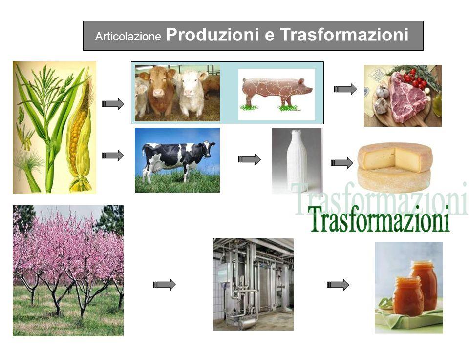 IIIIVV Produzioni vegetali165132 Trasformazione dei prodotti6699 Econ.