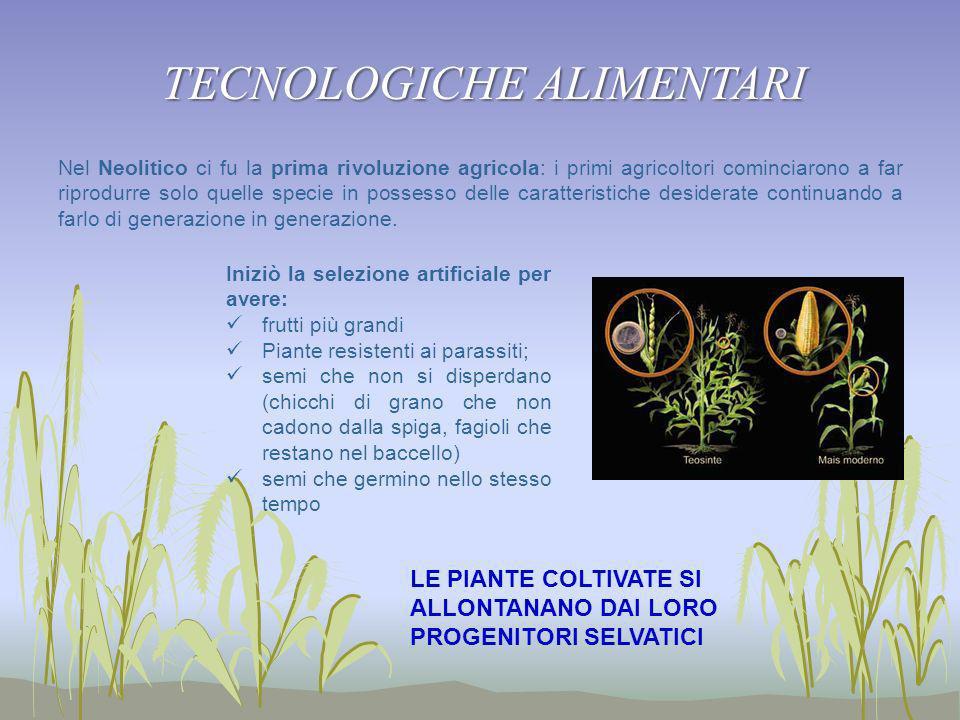 Nel Neolitico ci fu la prima rivoluzione agricola: i primi agricoltori cominciarono a far riprodurre solo quelle specie in possesso delle caratteristi