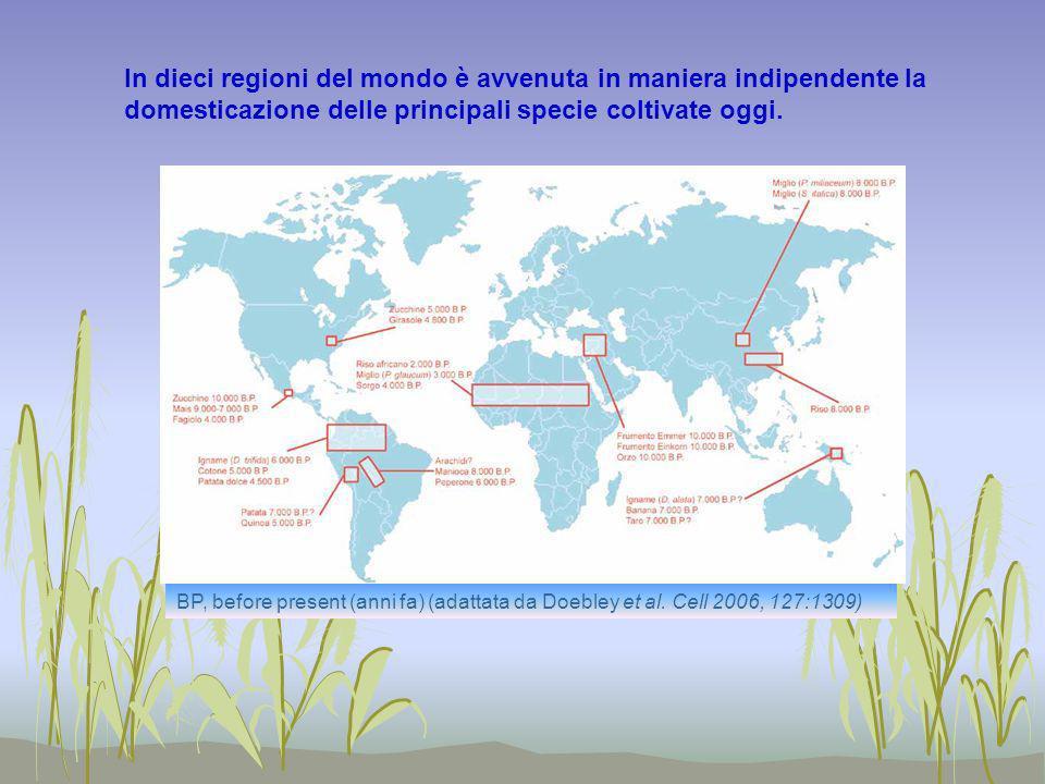 In dieci regioni del mondo è avvenuta in maniera indipendente la domesticazione delle principali specie coltivate oggi. BP, before present (anni fa) (