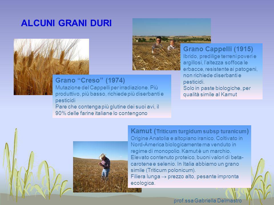 prof.ssa Gabriella Delmastro Grano Creso (1974) Mutazione del Cappelli per irradiazione. Più produttivo, più basso, richiede più diserbanti e pesticid