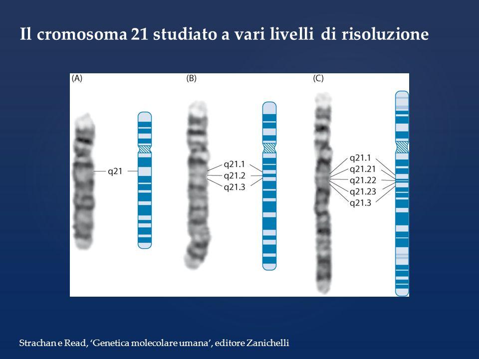 Il cromosoma 21 studiato a vari livelli di risoluzione Strachan e Read, Genetica molecolare umana, editore Zanichelli