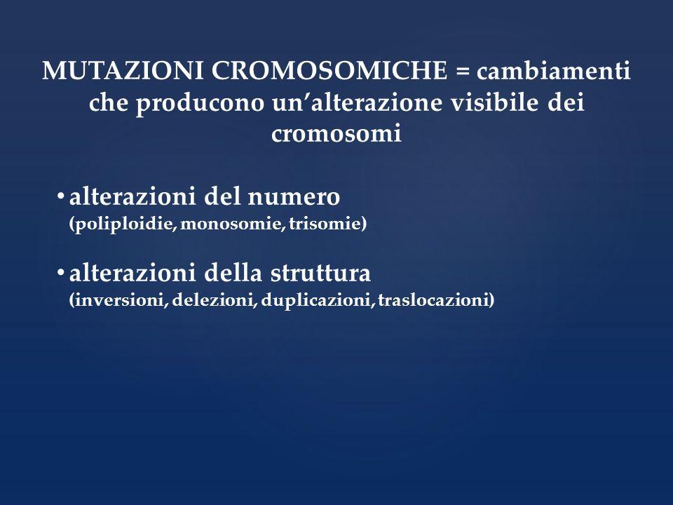 MUTAZIONI CROMOSOMICHE = cambiamenti che producono unalterazione visibile dei cromosomi alterazioni del numero (poliploidie, monosomie, trisomie) alte
