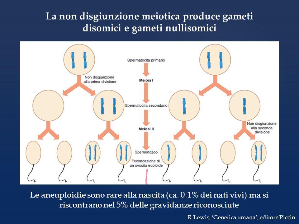 La non disgiunzione meiotica produce gameti disomici e gameti nullisomici Le aneuploidie sono rare alla nascita (ca. 0.1% dei nati vivi) ma si riscont