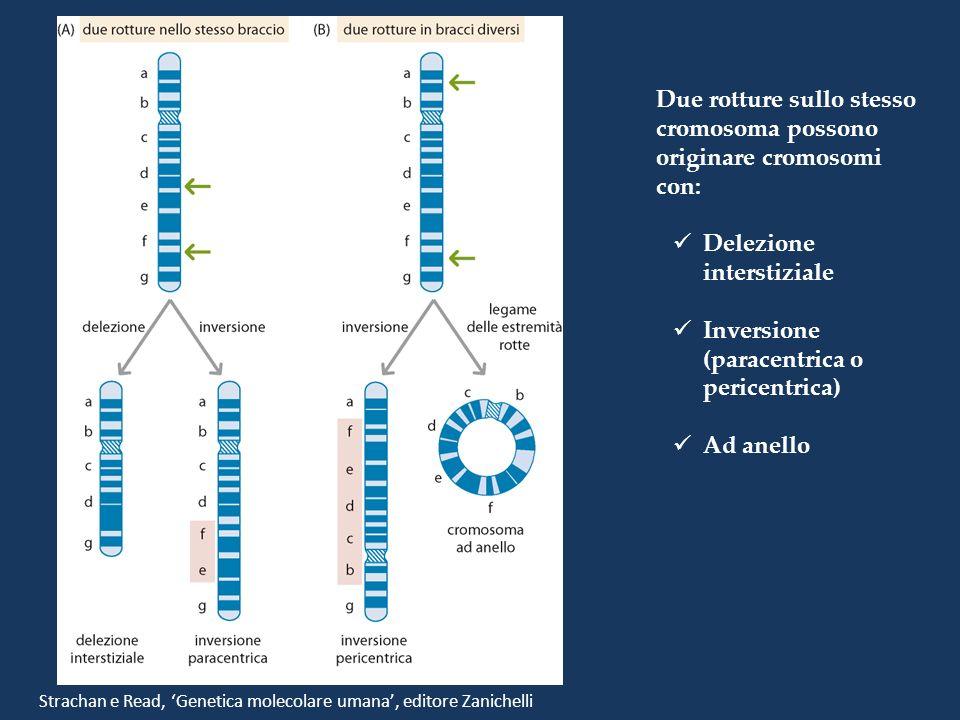 Due rotture sullo stesso cromosoma possono originare cromosomi con: Delezione interstiziale Inversione (paracentrica o pericentrica) Ad anello Stracha