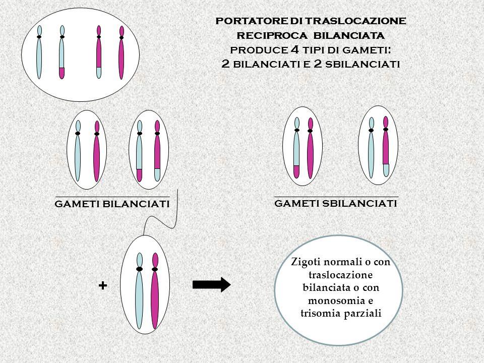 portatore di traslocazione reciproca bilanciata produce 4 tipi di gameti: 2 bilanciati e 2 sbilanciati gameti bilanciati gameti sbilanciati + Zigoti n