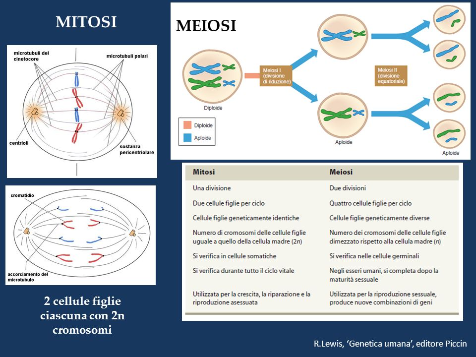 2 cellule figlie ciascuna con 2n cromosomi MITOSI MEIOSI R.Lewis, Genetica umana, editore Piccin