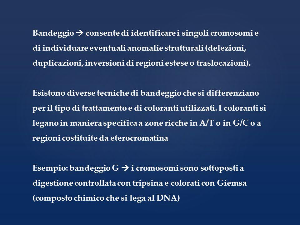 Bandeggio consente di identificare i singoli cromosomi e di individuare eventuali anomalie strutturali (delezioni, duplicazioni, inversioni di regioni