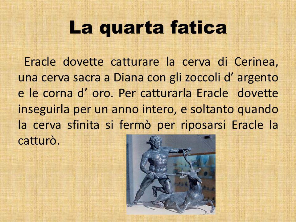 La quarta fatica Eracle dovette catturare la cerva di Cerinea, una cerva sacra a Diana con gli zoccoli d argento e le corna d oro. Per catturarla Erac