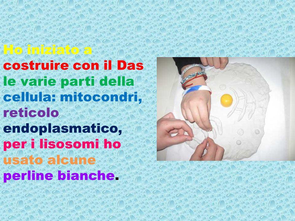 A cura dell alunna Giovanna Pia Ciarciello e gli alunni della 5 °C Montessori.