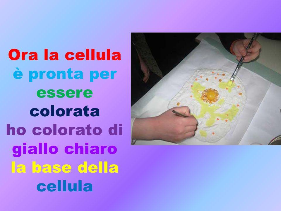 Ho usato il colore marrone per colorare la membrana cellulare e il reticolo endoplasmatico e con gli altri colori gli altri organuli.