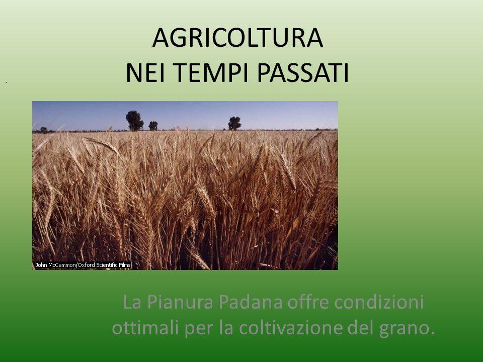 AGRICOLTURA NEI TEMPI PASSATI La Pianura Padana offre condizioni ottimali per la coltivazione del grano..