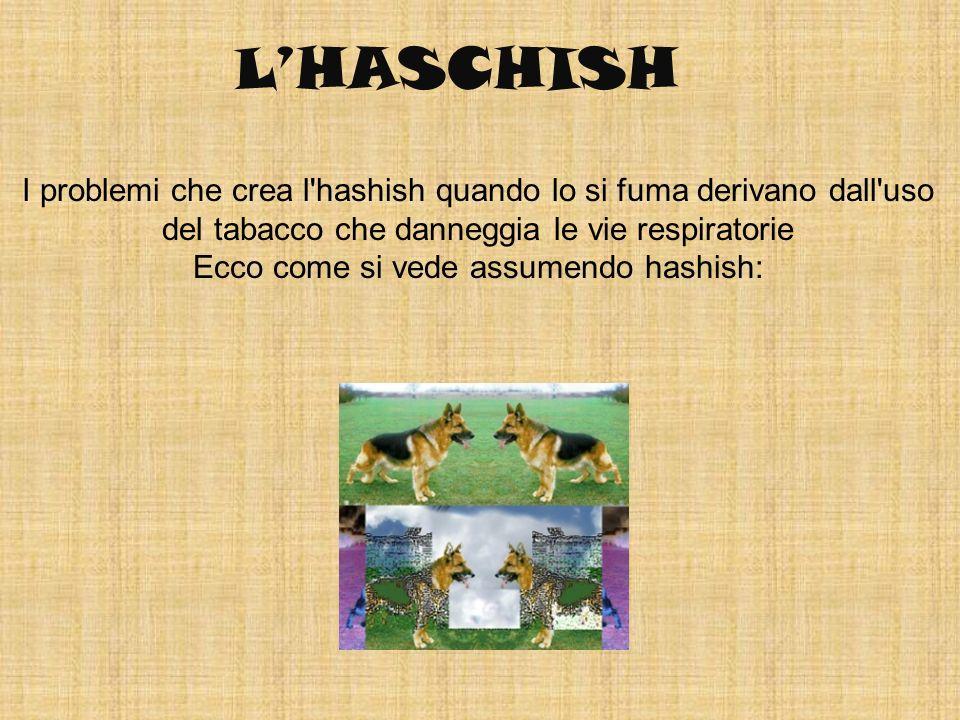 LHASCHISH I problemi che crea l'hashish quando lo si fuma derivano dall'uso del tabacco che danneggia le vie respiratorie Ecco come si vede assumendo