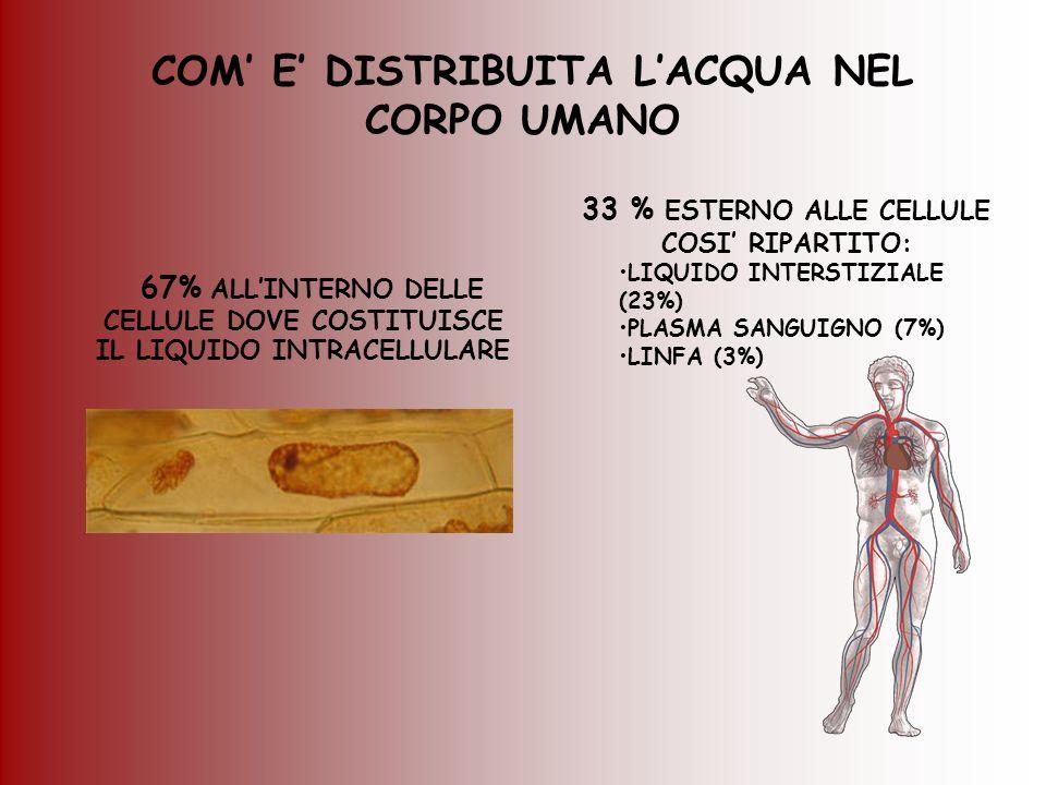 COM E DISTRIBUITA LACQUA NEL CORPO UMANO 67% ALLINTERNO DELLE CELLULE DOVE COSTITUISCE IL LIQUIDO INTRACELLULARE 33 % ESTERNO ALLE CELLULE COSI RIPART