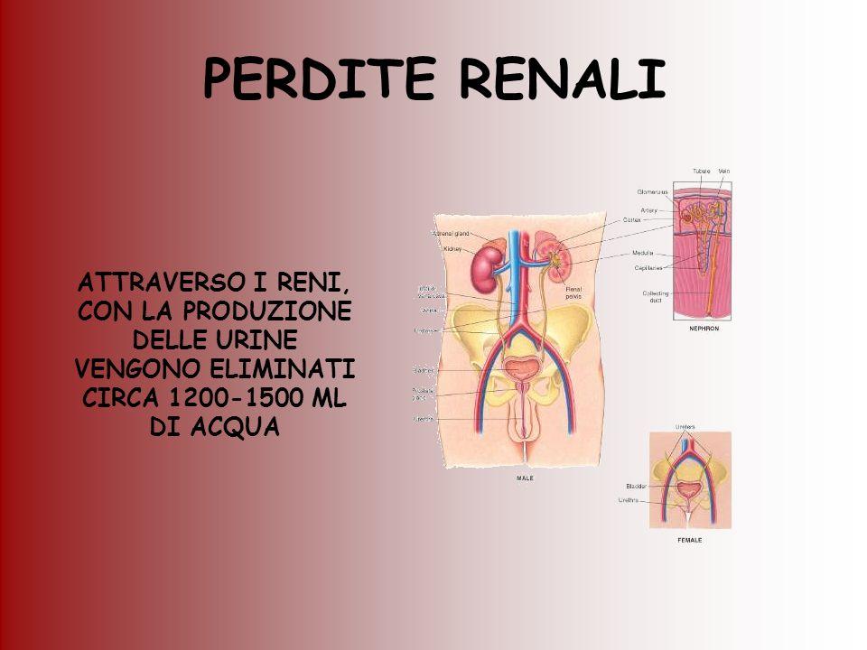 PERDITE RENALI ATTRAVERSO I RENI, CON LA PRODUZIONE DELLE URINE VENGONO ELIMINATI CIRCA 1200-1500 ML DI ACQUA