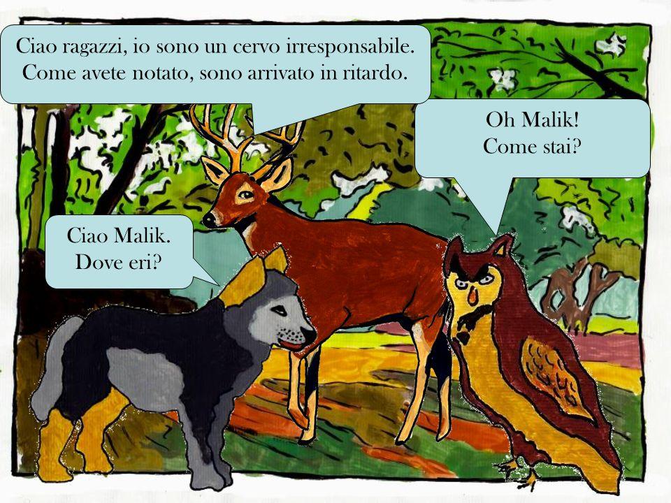 Oh Malik.Come stai. Ciao Malik. Dove eri. Ciao ragazzi, io sono un cervo irresponsabile.