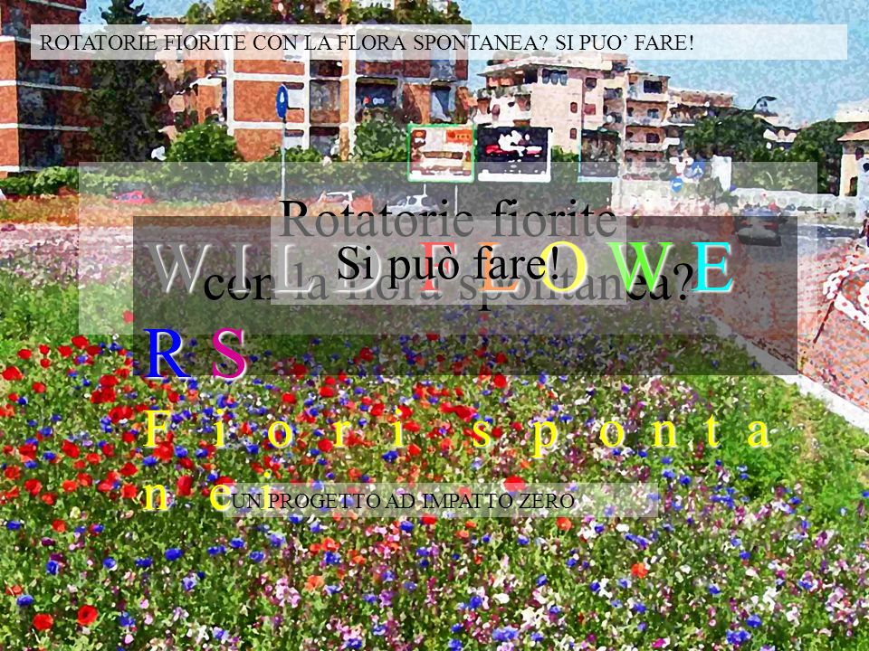 Rotatorie fiorite con la flora spontanea? W I L D F L O W E R S F i o r i s p o n t a n e i Si può fare! ROTATORIE FIORITE CON LA FLORA SPONTANEA? SI