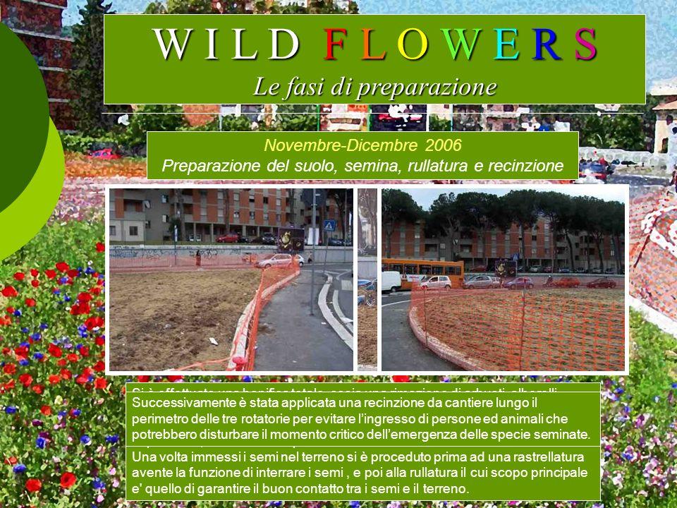 W I L D F L O W E R S Le fasi di preparazione Novembre-Dicembre 2006 Preparazione del suolo, semina, rullatura e recinzione Si è effettuato una bonifi