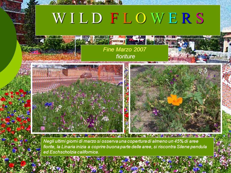 Fine Marzo 2007 fioriture Negli ultimi giorni di marzo si osserva una copertura di almeno un 45% di aree fiorite, la Linaria inizia a coprire buona pa
