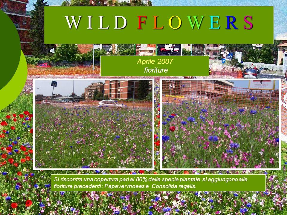 Aprile 2007 fioriture Si riscontra una copertura pari al 80% delle specie piantate si aggiungono alle fioriture precedenti : Papaver rhoeas e Consolid