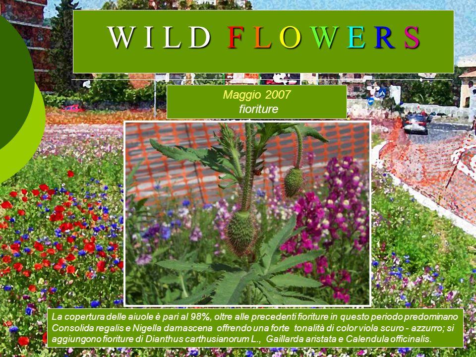 Maggio 2007 fioriture La copertura delle aiuole è pari al 98%, oltre alle precedenti fioriture in questo periodo predominano Consolida regalis e Nigel