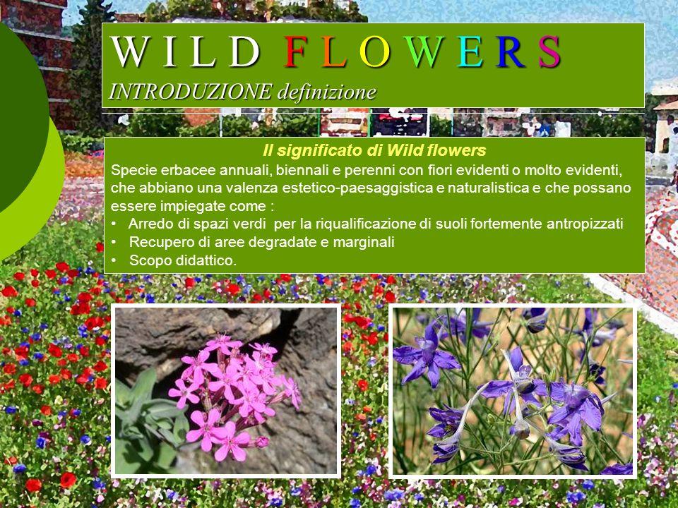 W I L D F L O W E R S INTRODUZIONE definizione Il significato di Wild flowers Specie erbacee annuali, biennali e perenni con fiori evidenti o molto ev