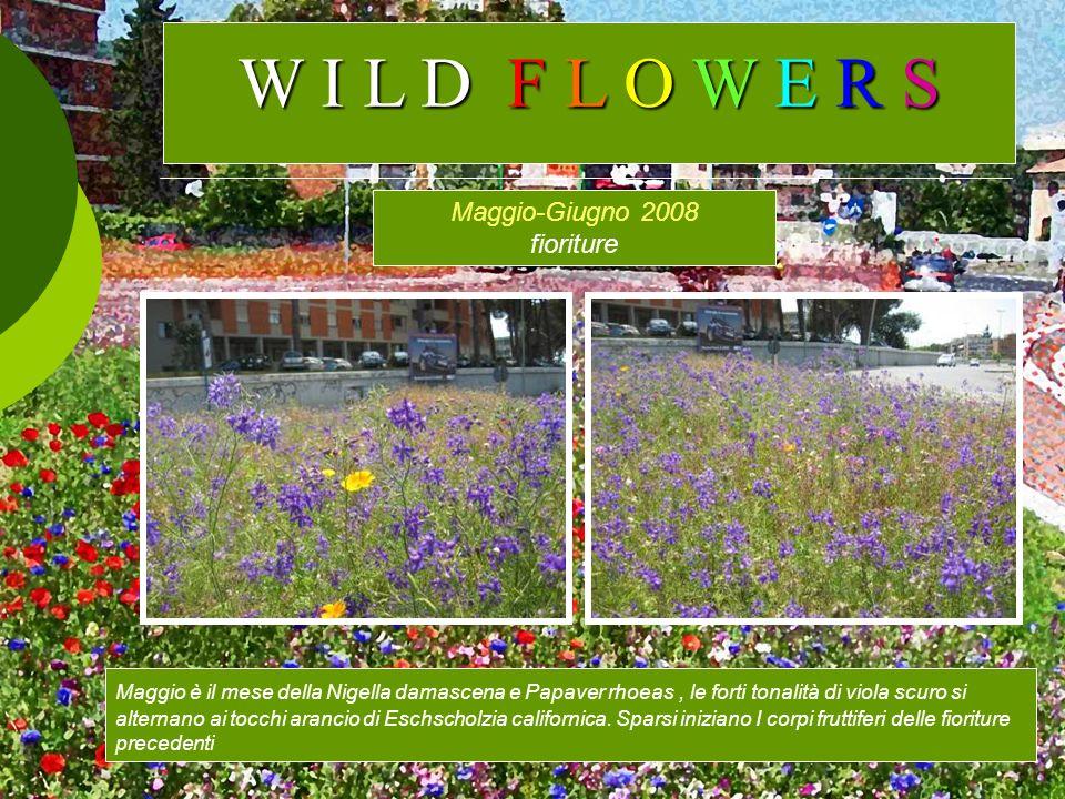 Maggio-Giugno 2008 fioriture Maggio è il mese della Nigella damascena e Papaver rhoeas, le forti tonalità di viola scuro si alternano ai tocchi aranci