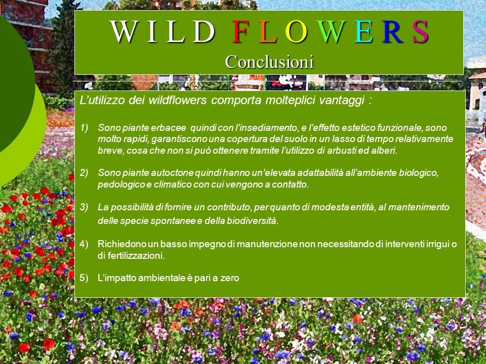 W I L D F L O W E R S Conclusioni Lutilizzo dei wildflowers comporta molteplici vantaggi : 1)Sono piante erbacee quindi con linsediamento, e leffetto