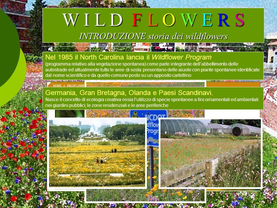 W I L D F L O W E R S INTRODUZIONE storia dei wildflowers Nel 1985 il North Carolina lancia il Wildflower Program (programma relativo alla vegetazione