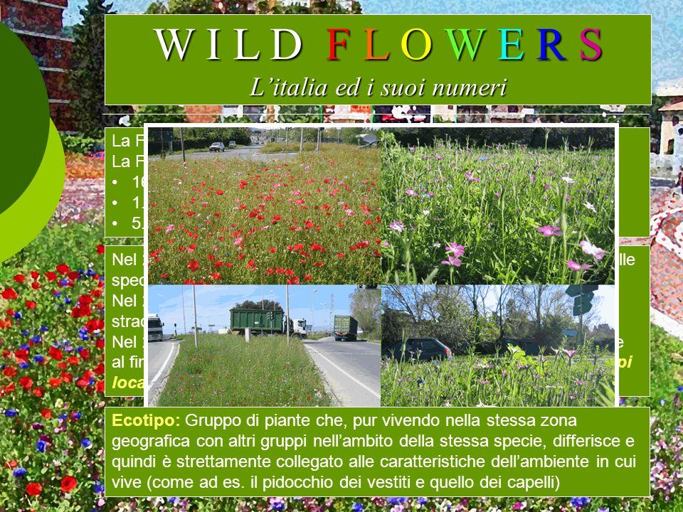 W I L D F L O W E R S Litalia ed i suoi numeri La Flora mediterranea conta circa 20.000 specie. La Flora Italiana si compone, secondo Pignatti (1982),