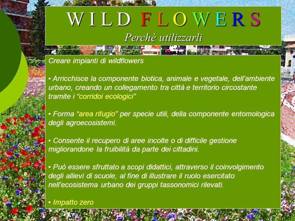 W I L D F L O W E R S Perchè utilizzarli Creare impianti di wildflowers Arricchisce la componente biotica, animale e vegetale, dellambiente urbano, cr