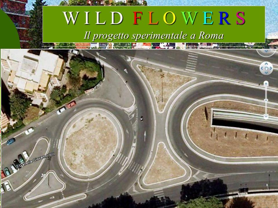 W I L D F L O W E R S Il progetto sperimentale a Roma Il Progetto è stato realizzato in tre rotatorie della XIX circ. dalla cooperativa sociale Etrusc
