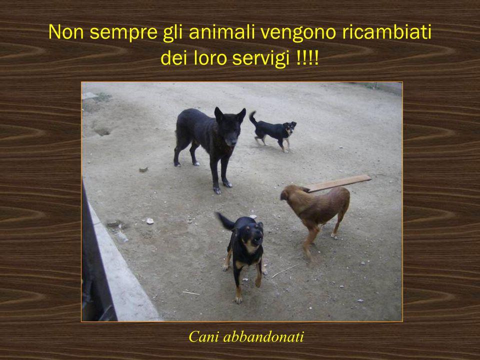 Non sempre gli animali vengono ricambiati dei loro servigi !!!! Cani abbandonati